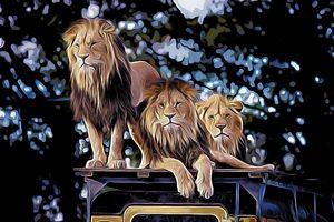 Lions - carpeDiemNY