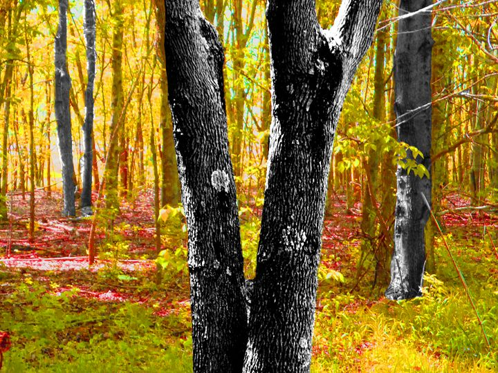 Lovely Forest in Yellows - NeverFarAway Designs