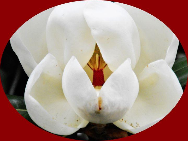 Grand Magnolia - Art by I AM Studio