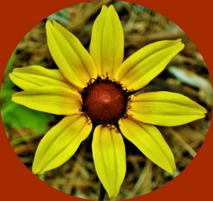 Blackeyed Susan - Art by I AM Studio