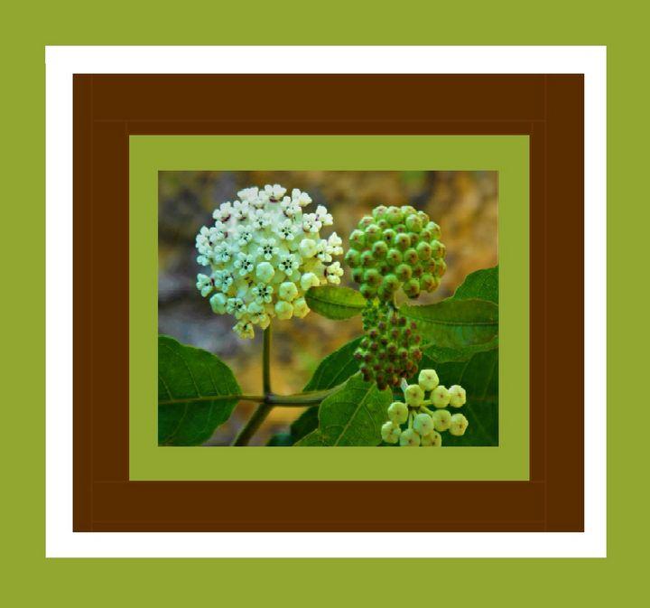 White Milkweed - Art by I AM Studio