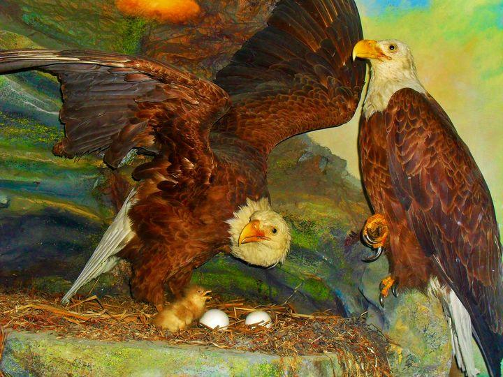 Eagles' Nest - Art by I AM Studio