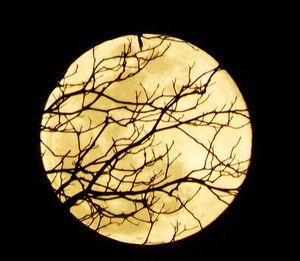 Super Moon Up Close - Art by I AM Studio
