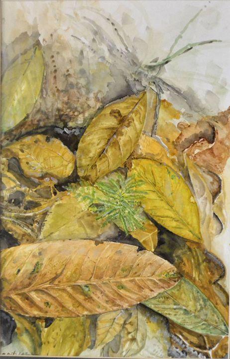 dry leaves at sg.congkak - Apit Anip Arts