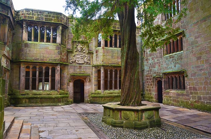 Yew Tree at Skipton Castle - Spade Photo