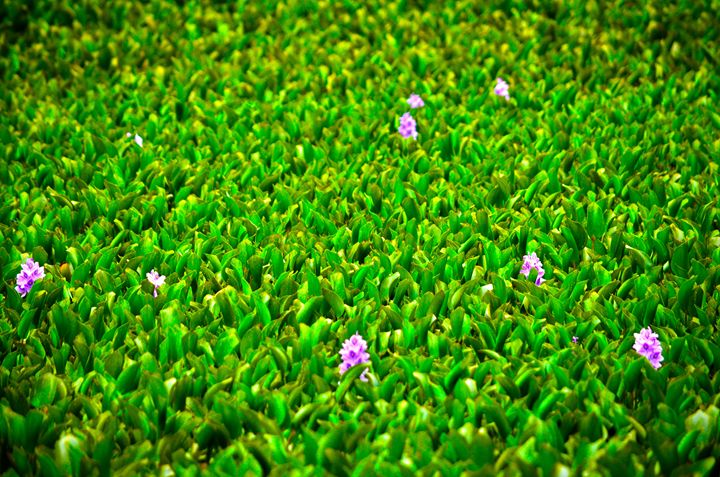 Green water plants. - Spade Photo