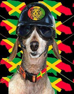 Jamaican Biker Dog