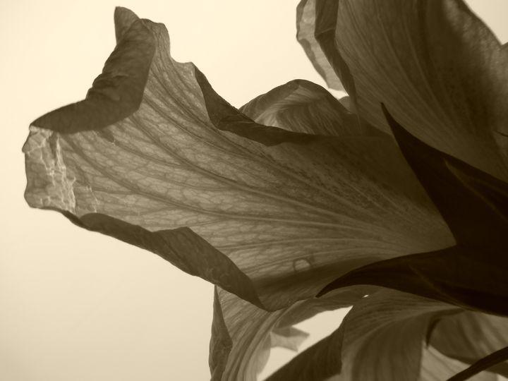 Petal's Delight - Rosa's Photography
