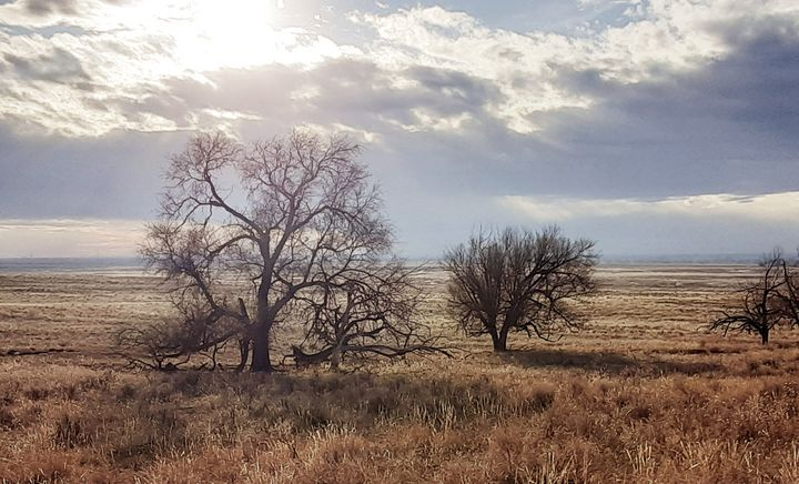 Sun, Clouds, Tree - Emily McCurry Photography