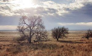 Sun, Clouds, Tree