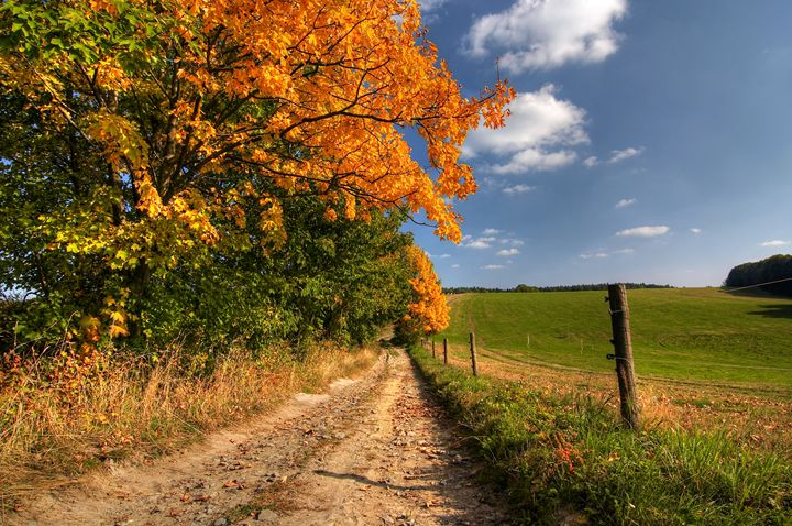 country road and autumn trees - Art Gallery