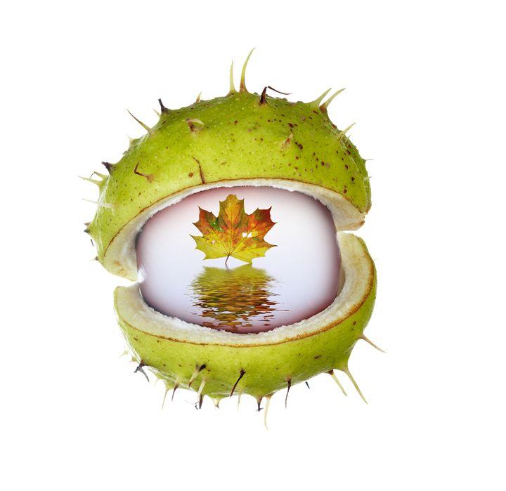 eye of autumn - Art Gallery