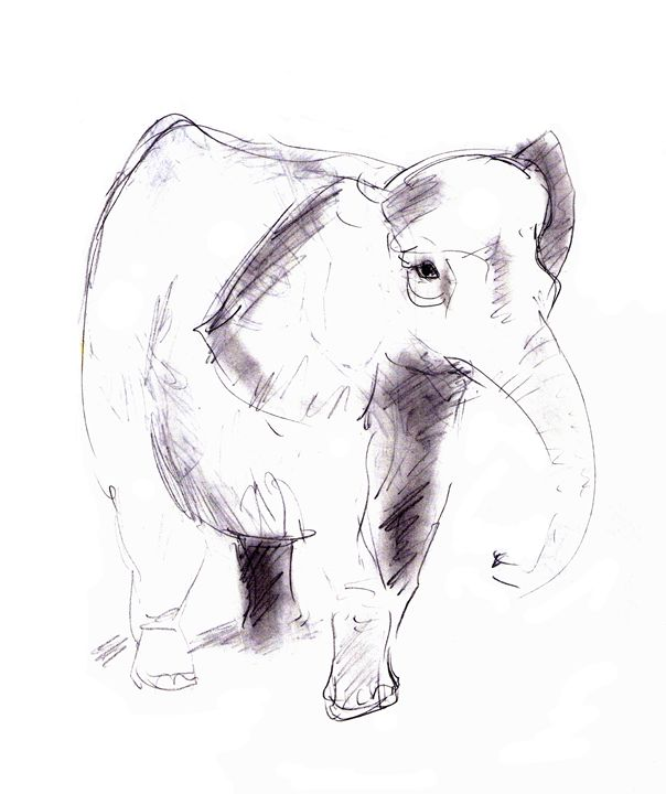 elephant - Art Gallery