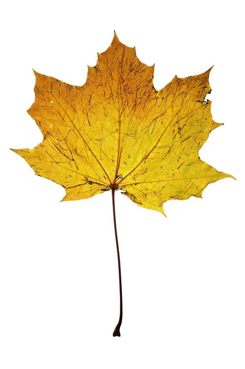 autumn leaf - Art Gallery