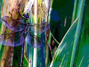 Dragonfly Likes Corn