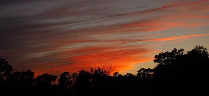 Florida Winter Night - John McAfee