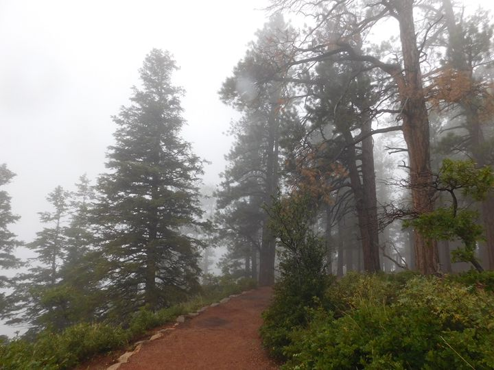 In a fog - Jenn Mitchell