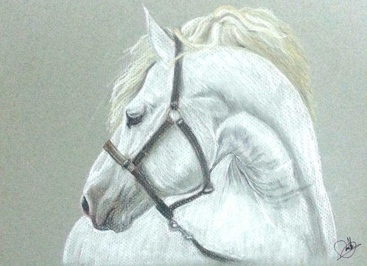 Stallion -  Salimhmz