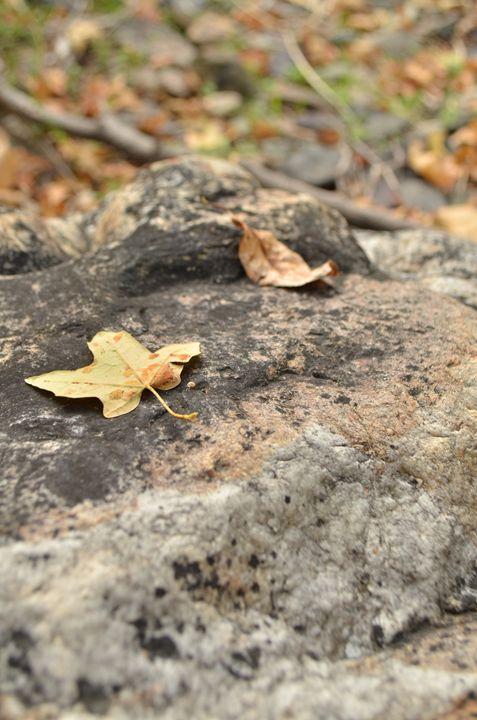 Leaf Zen - Chilleigh