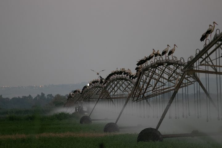 Storks in constant motion - stuts