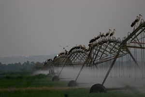 Storks in constant motion