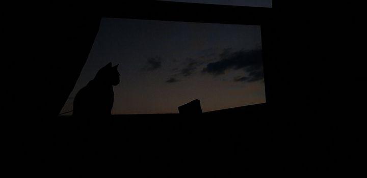 cat raize the sun - stuts