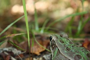 A Frog's Eye View