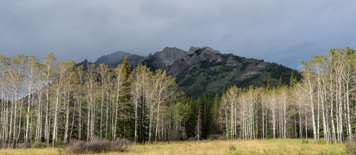 Trees and Mountains - Brent L PhotoArt