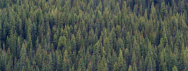 Trees - Brent L PhotoArt