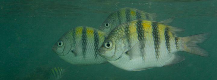 Fish - Brent L PhotoArt