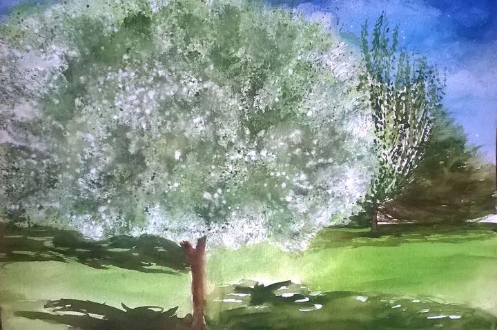 Flowering dogwood tree - Ginger Czarnecki