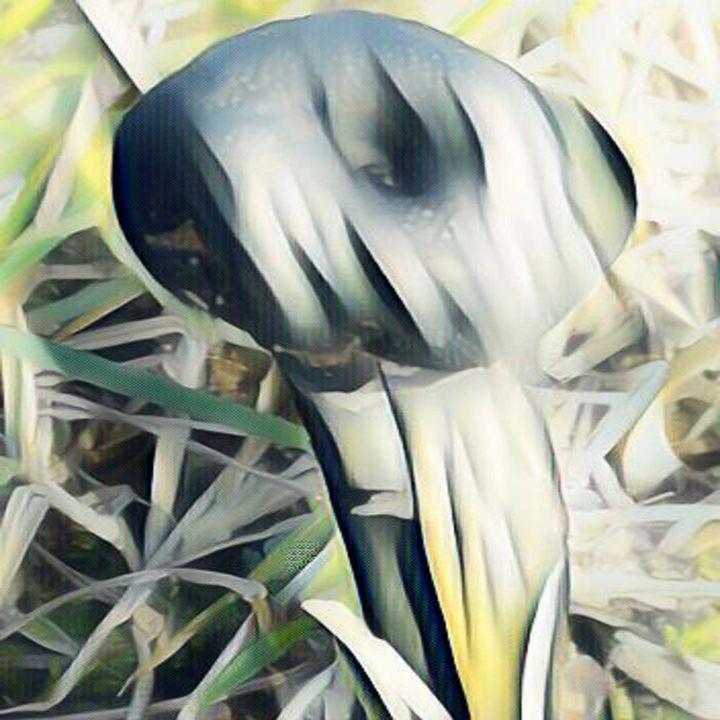 Black Mushroom - Different View