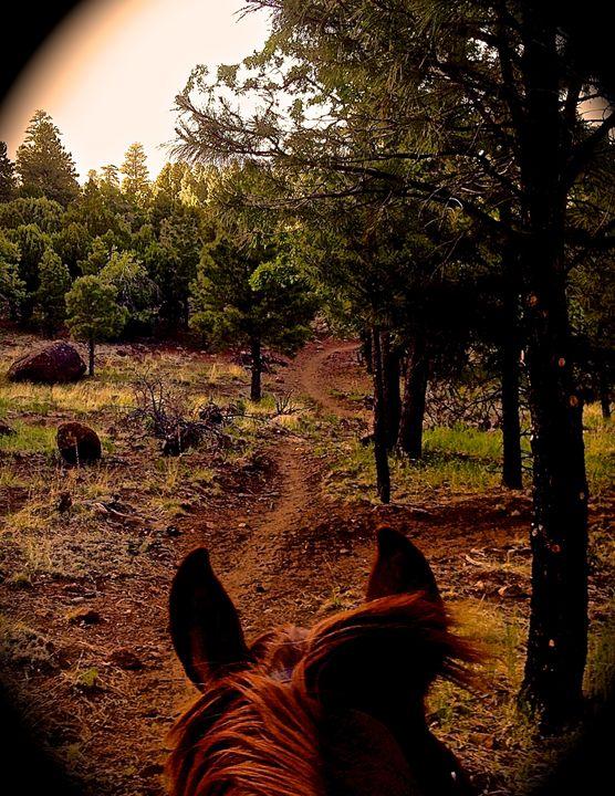 Horse Ears on Mt. Elden Trail - Nobility Ranch, Season M. Ellison
