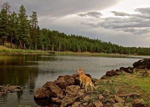 Lake Dog At Attention