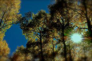 Aspen sun beams