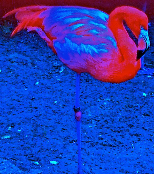 Blue Flamingo - Nobility Ranch, Season M. Ellison