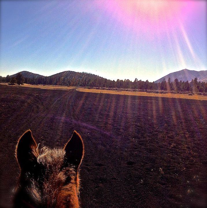 Beams of Nobility - Nobility Ranch, Season M. Ellison