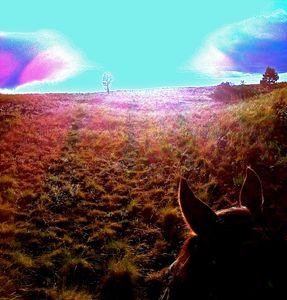 Hart Prairie through the Horses Ears