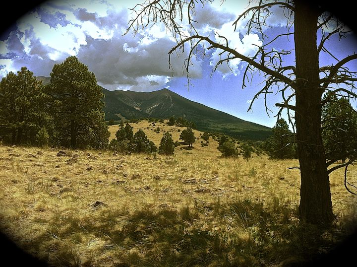 Timberline Horse Ride, Mt. View - Nobility Ranch, Season M. Ellison