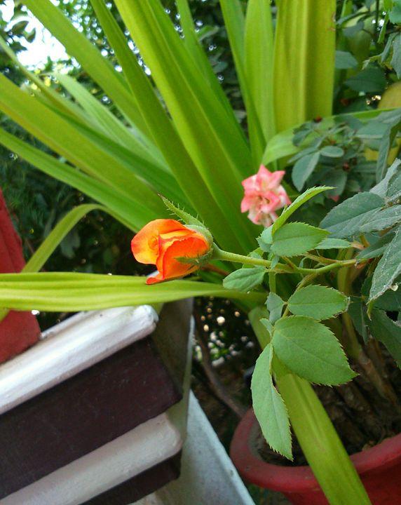 Rosebud - Swati Choudhary