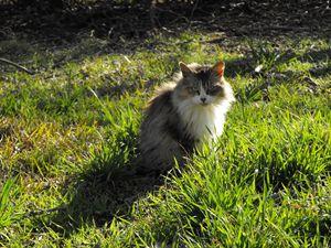 The Cat's Stare