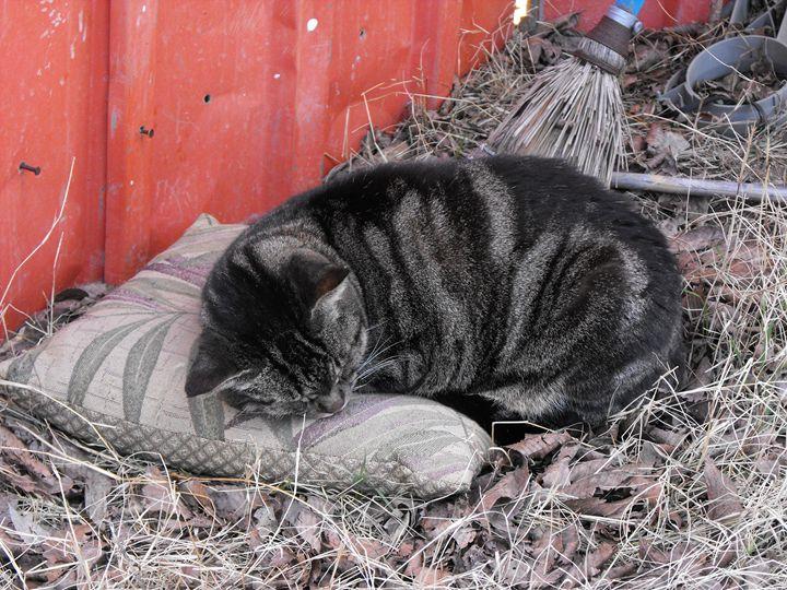 Cat Nap - Melissa Anthony