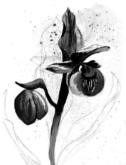 Lady Slipper Splatter - Traveling Art Concepts