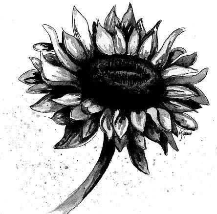 Sunflower - Amanda Richmond