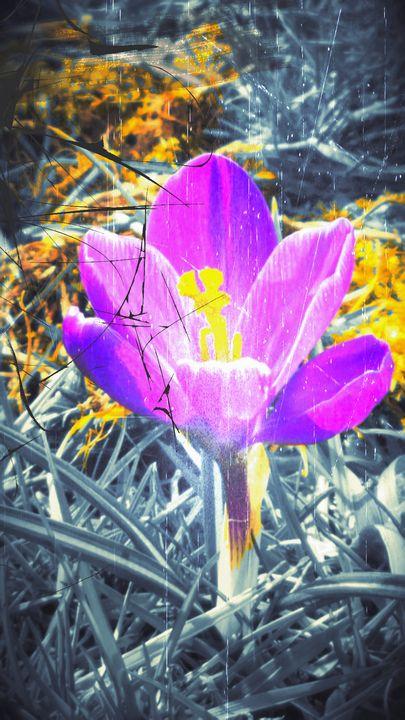 First Flower of Spring - EandCNov3