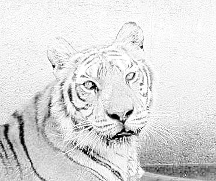 Tiger - chachiecoco