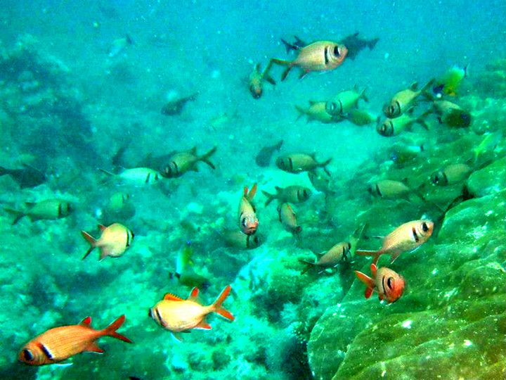 Fish 2 - chachiecoco