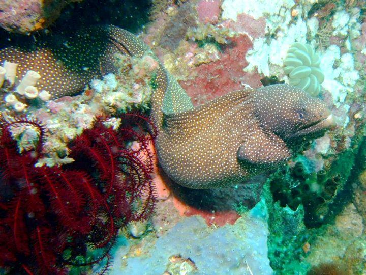 Fish 5 - chachiecoco