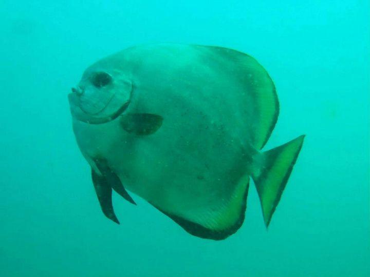 Fish 8 - chachiecoco