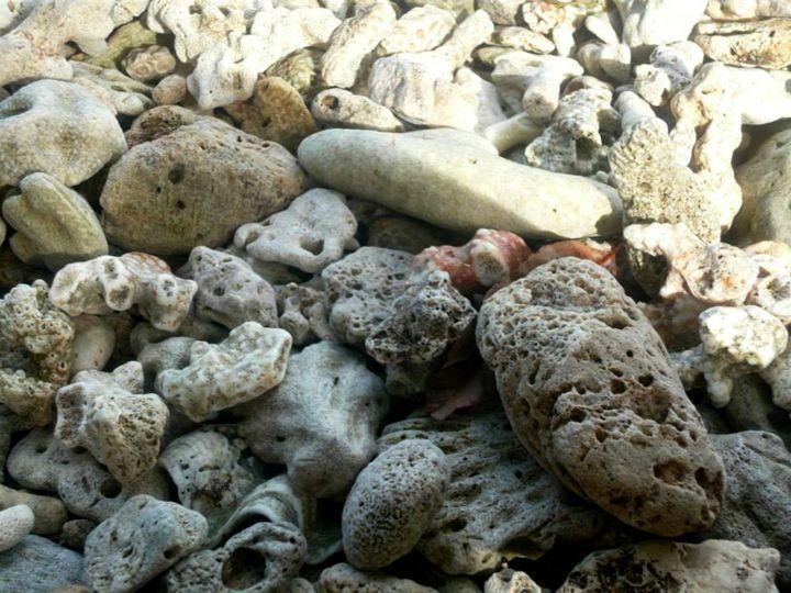 Coral - chachiecoco